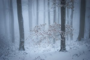 Enchanted Christmas woods with snow