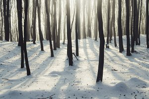 Sunrise in winter forest with snow