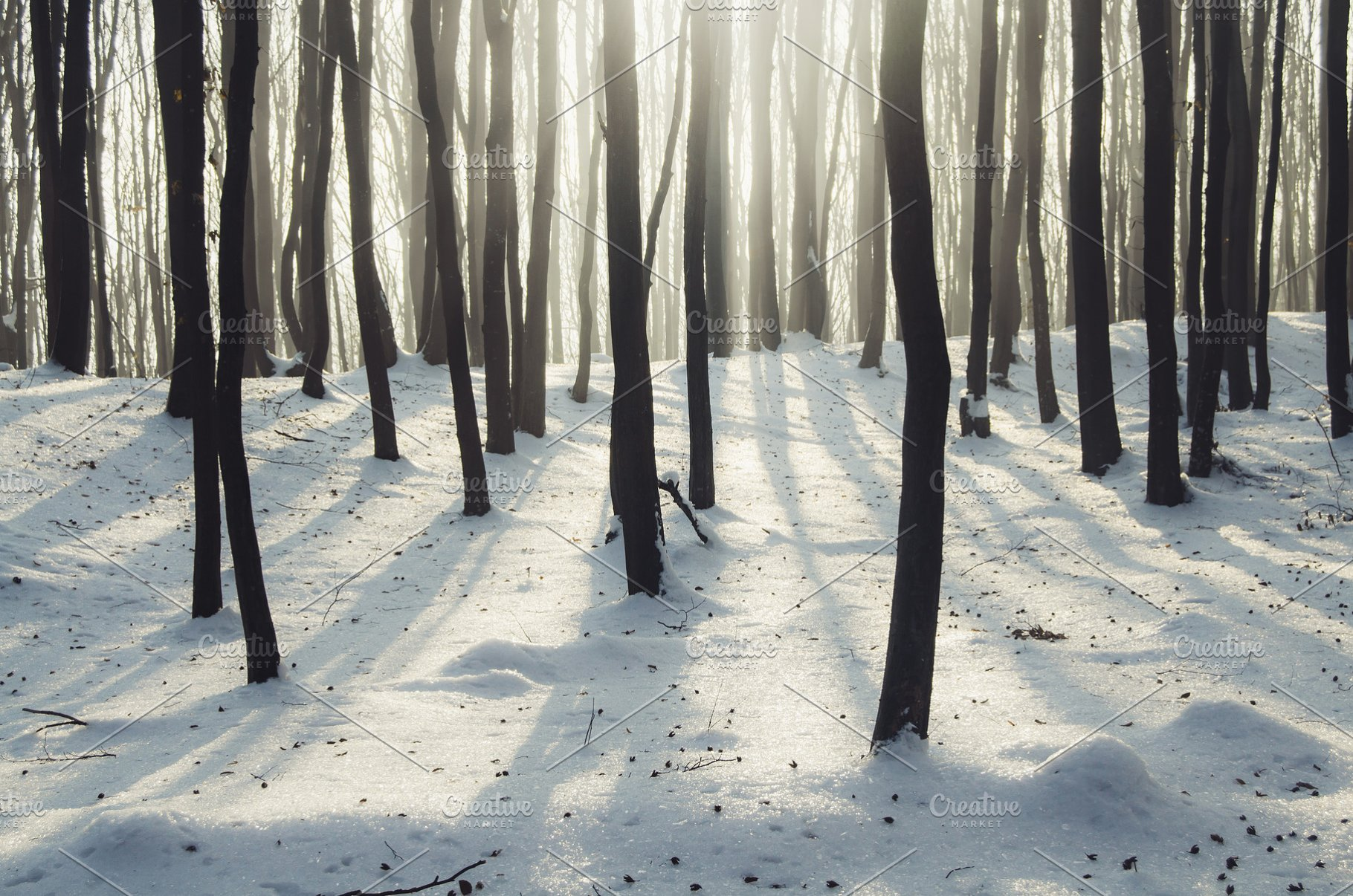 Winter Sunrise Forest
