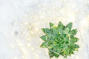 Succulent flower Christmas decor
