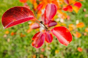 Red leaves on a tree top view