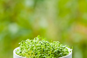 organic micro greens concept with