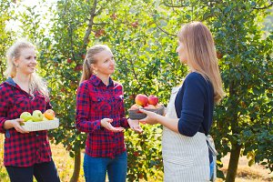 Apple orchard and openspace market