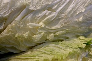 white chinese cabbage at market