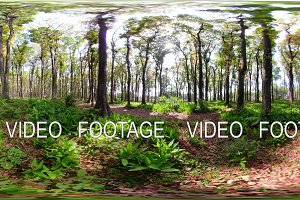 rainforest with large trees vr360