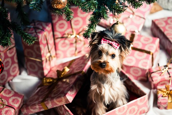 Stock Photos: Viktor Hanacek - Dog as a Christmas Present