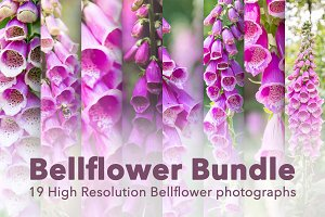 Bellflower - Flower Bundle!
