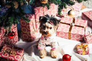 Cute Puppy Under Christmas Tree