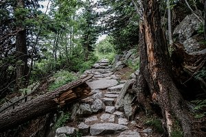 Mountain path and broken tree