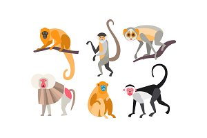 Collection of monkeys of different