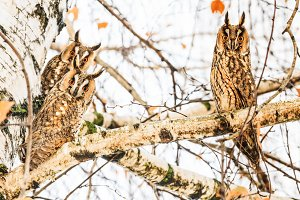 Beautiful owls are sitting on a tree