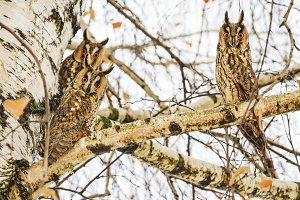 Owls are sitting on the beach with