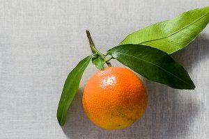 banner of one tangerine on the table