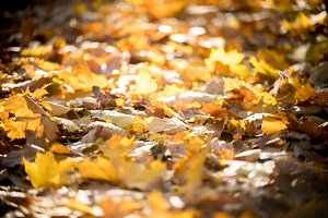 Yellow autumn leaves covered the