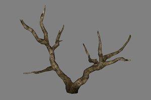 Dead_Tree_2