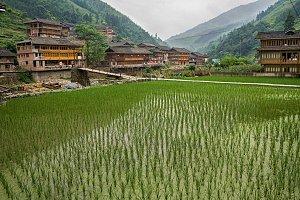 Paddy fields.Longsheng Yao Village.