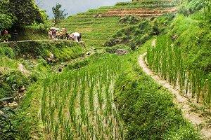 Beautiful terraced rice fields.China