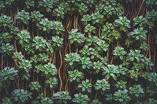 Sedum Palmeri Succulent plants II by  in Nature