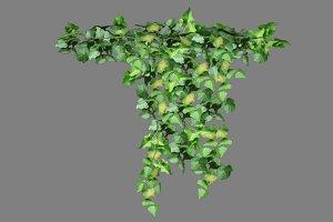 Ivy_Overhang