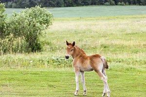 Little foal
