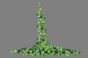 Ivy_Wall_Up