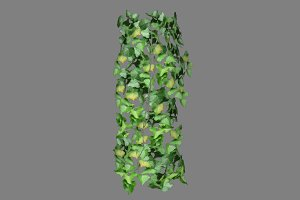 Ivy_Wrap