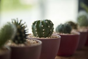 indoor cactus and succulent on borde