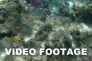 Underwater scene with sea plants