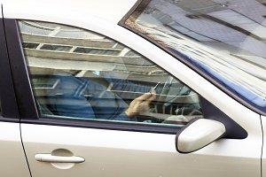 looking mobile phone  in car