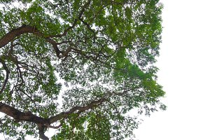 Tree leaves and branches foreground