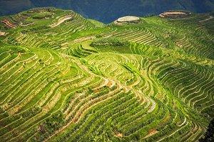 Landscape rice fields on terraced.