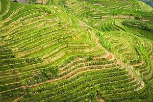 Beautiful Terraced rice fields