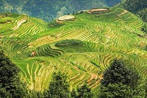 Longsheng or Longji Rice Terrace