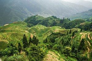 Terraced paddy field in Longsheng