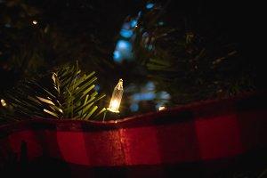 Single Christmas Light