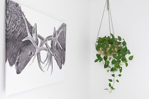 Hanging Pothos Gold Planter