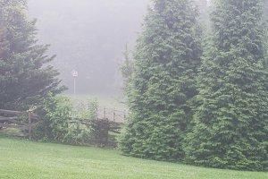 Morning Fog in Trees