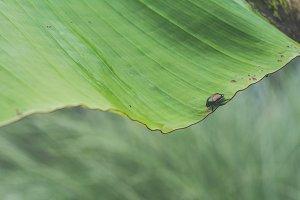 Bug on a Leaf in Garden