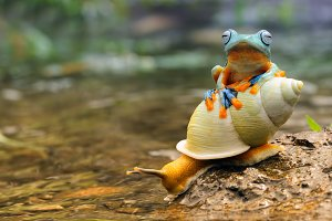 Flying Frog with Snail