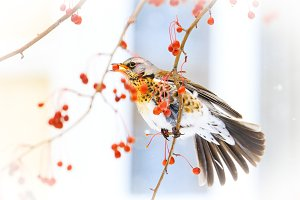 bird after your window eats red