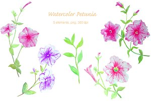 Watercolor Flower Petunia Clipart
