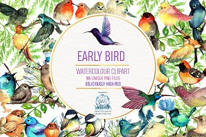 95 Bird Watercolor Clipart Graphics