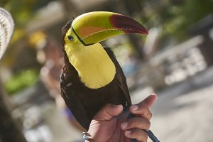 Tucan on my hand