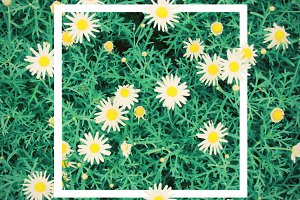 Frame on bloom flowers