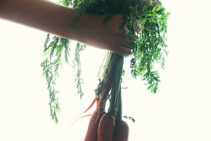 hands of a girl holding a carrot on