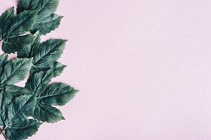 Dark green leaves frame over pastel