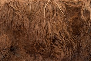 Animal skins texture of brown cow