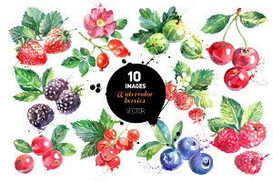 Watercolor Berries Vector Set