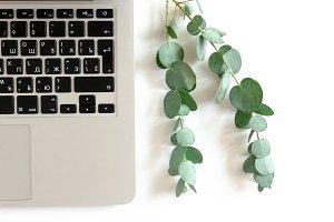 Laptop and eucalyptus branch