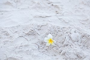 Flower on the sand